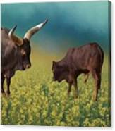 In The Canola Field Canvas Print