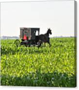 In The Corn Canvas Print