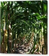In The Corn  Canvas Print