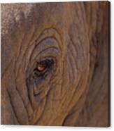 In The Eye Of The Elephant Canvas Print