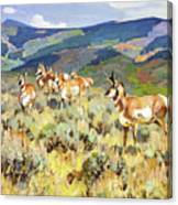 In The Foothills - Antelope Canvas Print