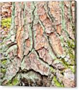 In The Forest Art Series - Tree Bark Patterns 1  Canvas Print