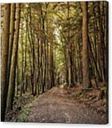 In The Forest Cathedral  Canvas Print