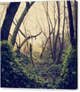 In The Forest Of Dreams Canvas Print