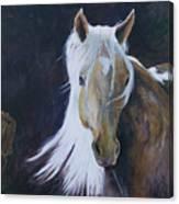 In The Moonbeam Canvas Print