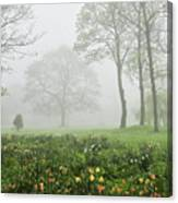 In The Morning10 Canvas Print