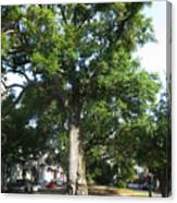In The Neutral Ground Canvas Print