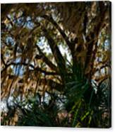 In The Shade Of A Florida Oak Canvas Print