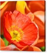 In The Tulip Garden Canvas Print
