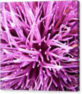 In Your Face Purple Canvas Print