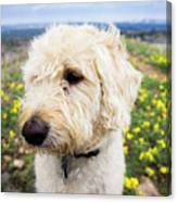 In Your Muzzle Canvas Print