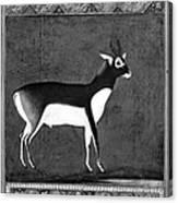 India: Black Buck Canvas Print