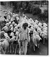 India: Shepherd, 1966 Canvas Print