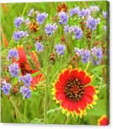 Indian Blanketflowers Gaillardia Puchella Canvas Print