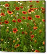 Indian Blankets Canvas Print