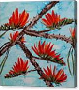 Indian Coral Tree Canvas Print