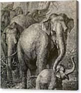 Indian Elephant, Endangered Species Canvas Print