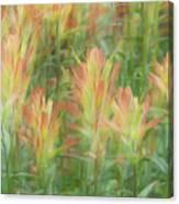 Indian Paint Brush Blurr  Canvas Print