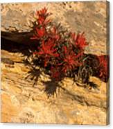 Indian Paint Brush Canvas Print