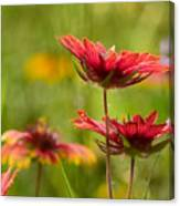 Bright Indian Blanket Canvas Print