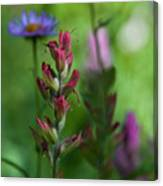 Indian Paintbrush With Beautiful Wildflower Bokeh Canvas Print