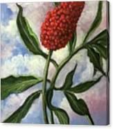 Indian Turnip Canvas Print