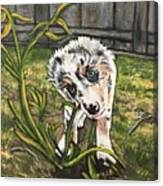 Indiana Bones Canvas Print