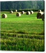 Indiana Hay Canvas Print