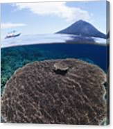 Indonesia, Coral Reef Canvas Print