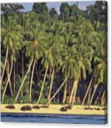 Indonesian Beach Canvas Print