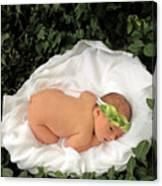 Newborn Infant Lying In Ivy Canvas Print