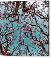 Infrared Frangipani Tree Canvas Print