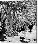 Infrared Indian River State College Hendry Campus #8 Canvas Print