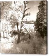 Infrared Landscape Canvas Print