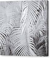 Infrared Palm Abstract Canvas Print