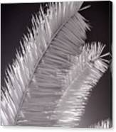 Infrared Palm Frond Canvas Print