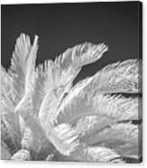 Infrared Sago Palm Canvas Print
