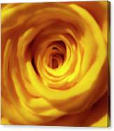 Inner Beauty Of A Rose Canvas Print
