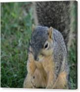 Inquisitive Squirrel Canvas Print
