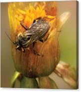Insect - Bee - Dare To Bee Different Canvas Print