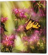 Insect - Butterfly - Golden Age  Canvas Print