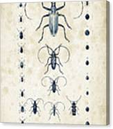 Insects - 1832 - 08 Canvas Print