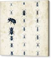 Insects - 1832 - 09 Canvas Print