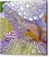 Inside A Bearded Iris Canvas Print