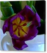 Inside A Purple Tulip Canvas Print