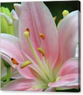 Inside The Lily  Canvas Print
