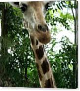 Inspector Giraffe Canvas Print