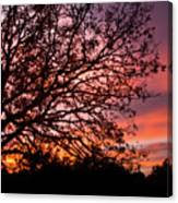 Intense Sunset Tree Silhouette Canvas Print