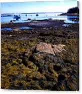 Inter-tidal Zone Deer Isle Canvas Print