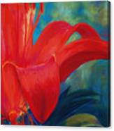 Intimate Lilly Canvas Print